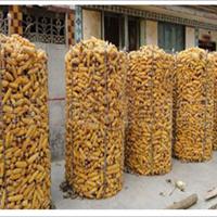 供应圈玉米网防锈能力强厂家窒息