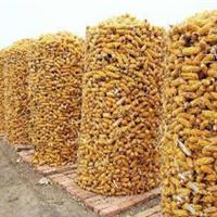 安平厂家玉米圈电焊网