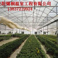 安阳锡桐温室工程有限公司