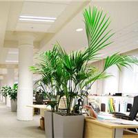 上海绿化租摆公司