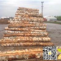 拉脱维亚AB级10柜的桦木原木