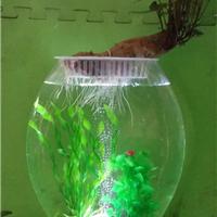 供应电子花瓶 电子水培花瓶 水培花卉花瓶