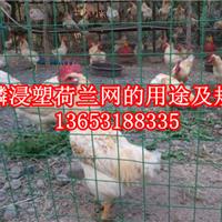 安平县麒麟荷兰网厂