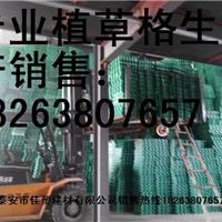 泰安排水板植草格制造有限公司