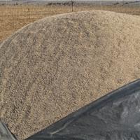 供应中砂细沙粗砂沙子分目河沙水洗河沙