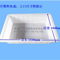 浙江500升养鱼箱 塑料鱼箱养鱼水槽厂家