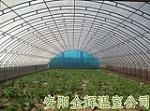 安阳市金辉温室技术有限公司