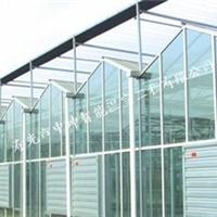 供应奎文最专业最优质的温室大棚建设