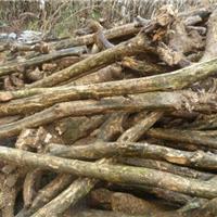 低价供应小叶黄杨木原木