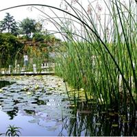 人工湿地湖泊前端治理/平米