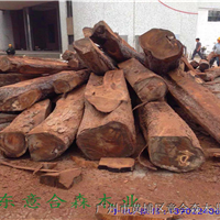 供应非洲进口精品刺猬紫檀,原木现货出售