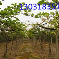 猕猴桃果树搭架专用钢丝【国标】不生锈钢丝