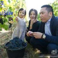 广西种葡萄的用2.6mm葡萄搭架专用钢丝
