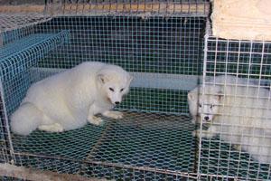 供应养殖用的笼|养殖电焊网|养狐狸电焊网