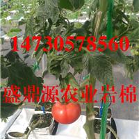 衡水农用岩棉西红柿栽培