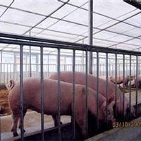 大连市【养殖场】专用采光板、促销价格
