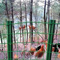 大庆绿色防护隔离栅18年老厂直销质量有保证