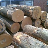 供应榉木原木
