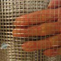 威海浸塑电焊网-内墙抹灰电焊网-河北电焊网厂家【品牌推广】