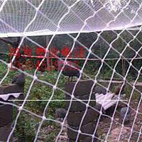 供应山鸡围网
