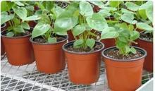 供应苗床网、花架网、养花网、植物网