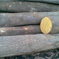 供应欧洲白蜡木原木/板材